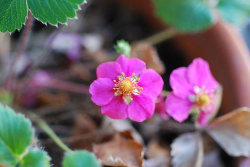 Margaret! Flowers!