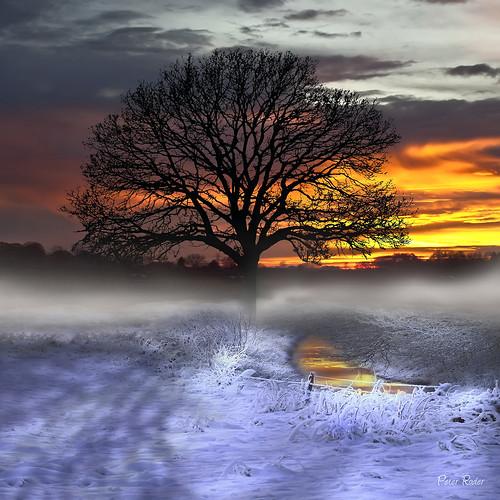 world schnee trees winter sun mist lake snow storm reflection ice nature water grass leaves birds clouds way landscape see frozen sonnenuntergang sundown dusk wolken thunderstorm gras eis sonne blätter sonnenaufgang gewitter friesland weg reflektion dunst unwetter gefroren