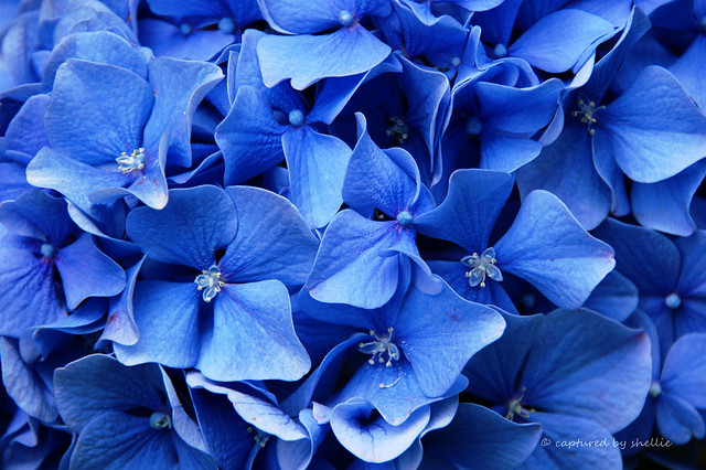 Assignment- Colour Blue