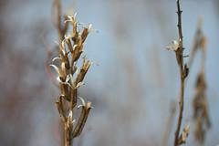 winter flowers 015