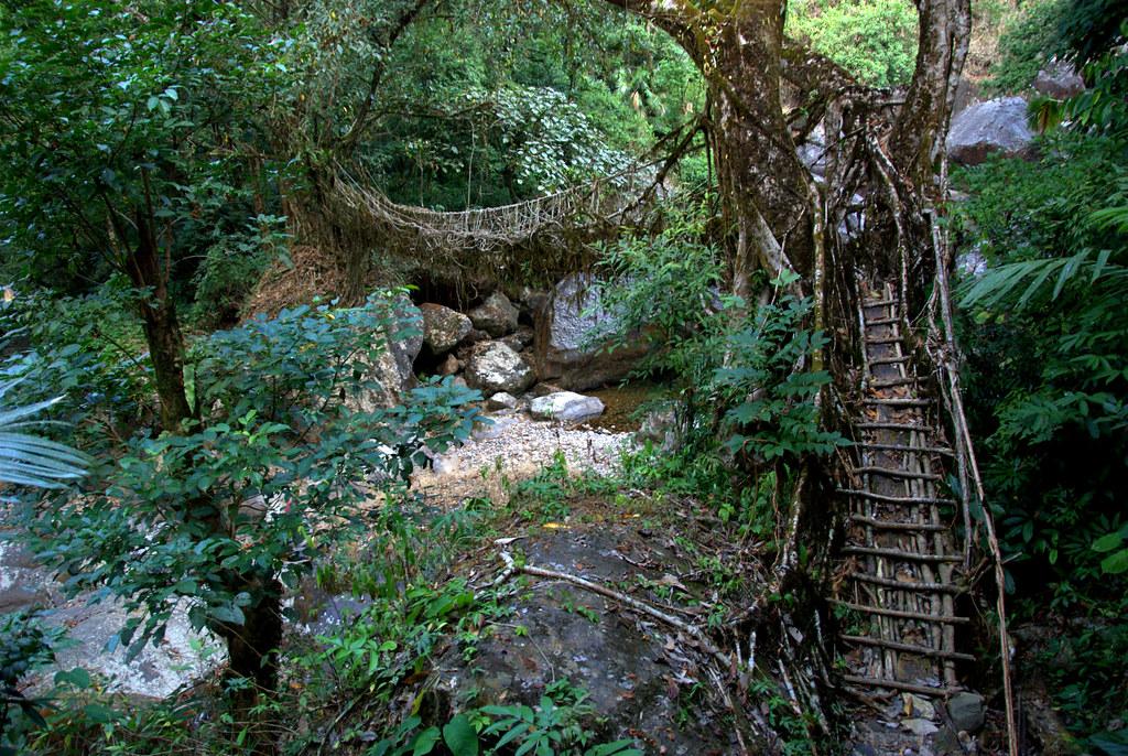 The 2nd living root bridge