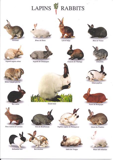 Nouvelle Images Rabbits