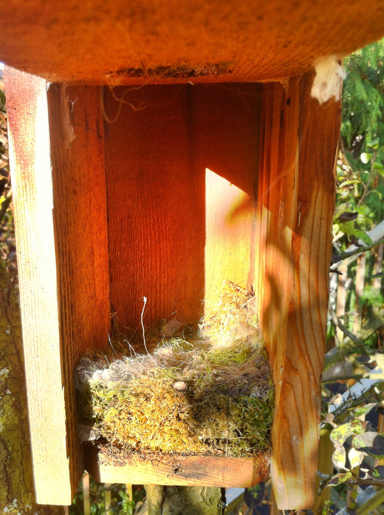 Inside a chickadee nesting box