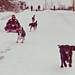 More Snow Fun by Skipbro