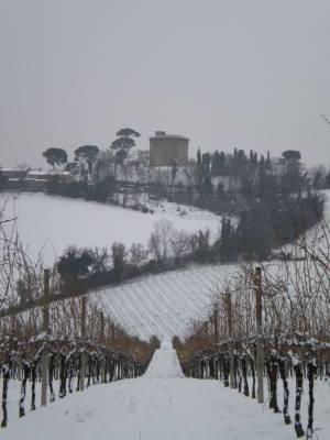 La vigna sotto la neve
