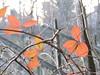 le foglie sono ancora rosse