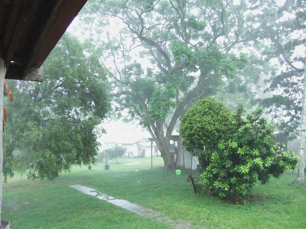 It's raining at the farm today..... | My backyard. You cant … | Flickr