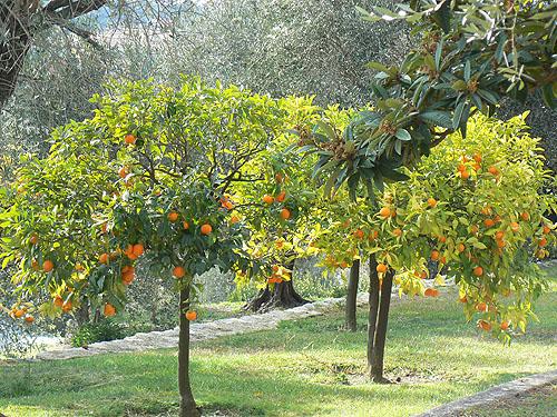 orangers 2.jpg