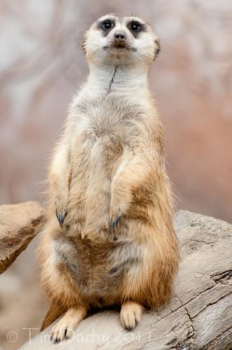 2011-12-26 - Zoo-44