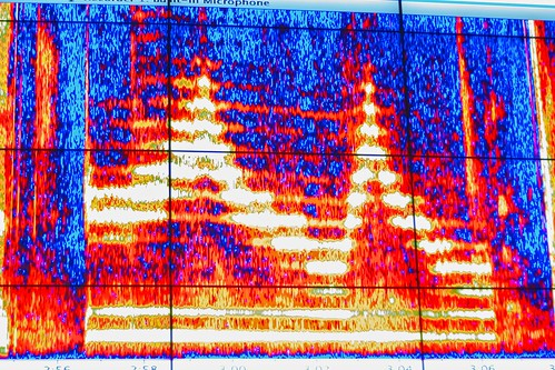 Throat Singing Spectrogram