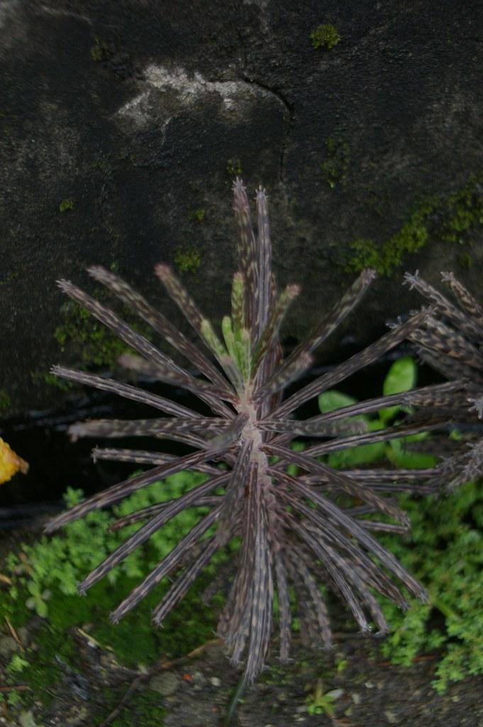 PENTACON 29mm的植物們