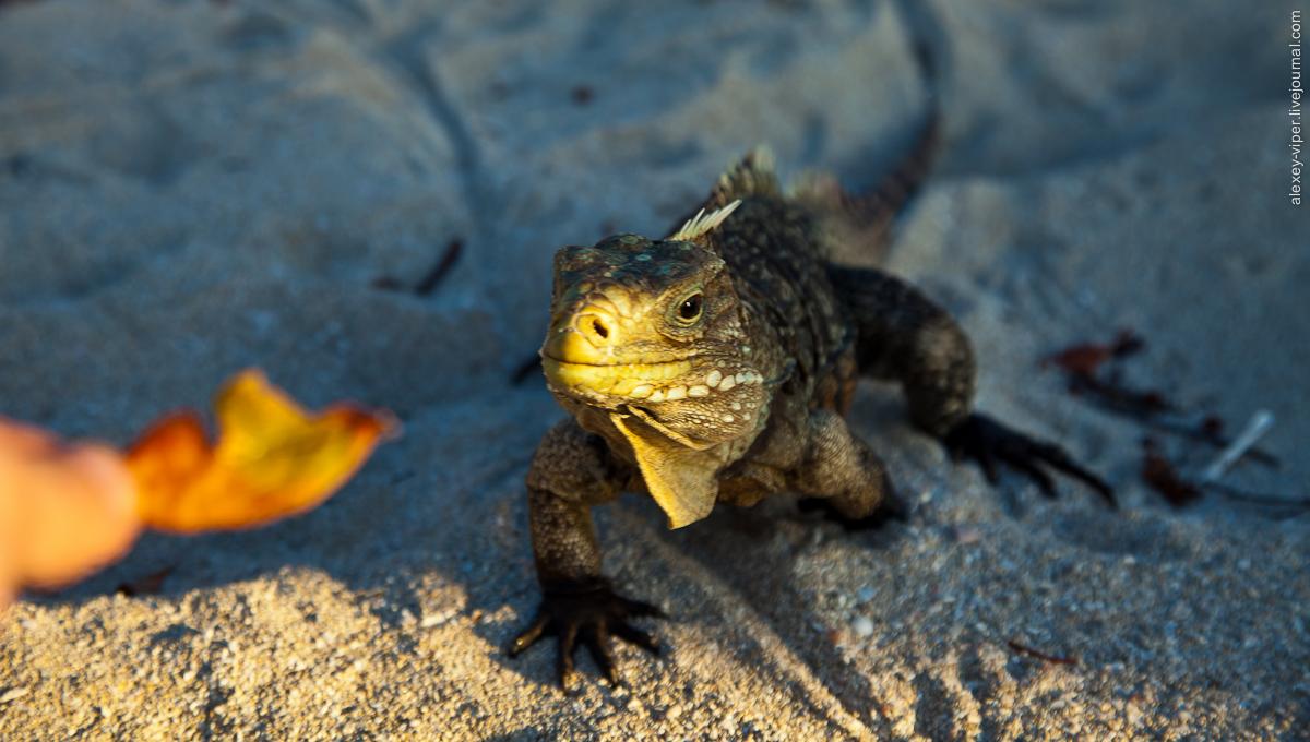 2012.01.12-2012.01.26_dive_safari_[cuba]-diving-022