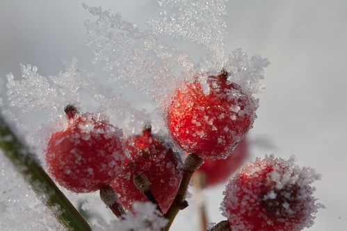 Frozen berries by Martin de Lusenet