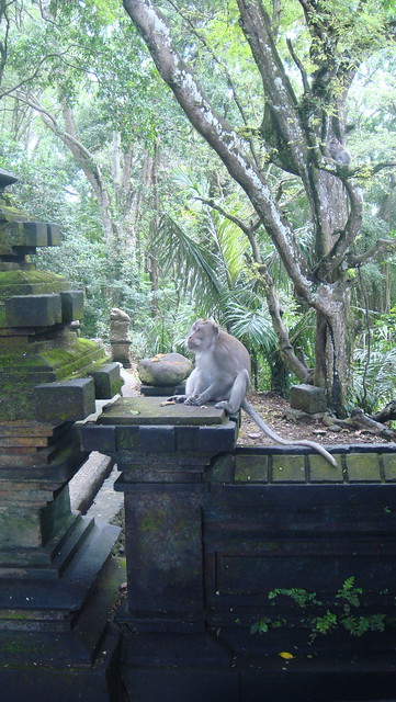 Monkey Forest, Ubud, Bali, Indonesia 印尼 峇里島 烏布 猴子森林
