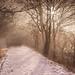 The dreamy path