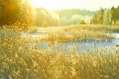 morning light sun cold ice reed reeds frozen nikon colours nikkor jyrki valo kotka 18200mm salmi aamu kylmä d7000 mygearandme mygearandmepremium mygearandmebronze mygearandmesilver mygearandmegold mygearandmeplatinum