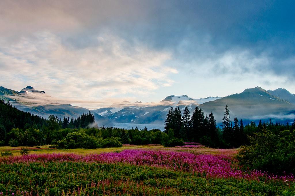 Jason.Kopp.02.FireweedAndGlacier.Juneau,Alaska.jpg