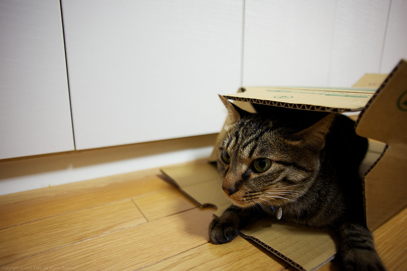 i love cardboard ♥