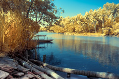 Neyyar River, Trivandrum, Kerala India (Infrared Photography)