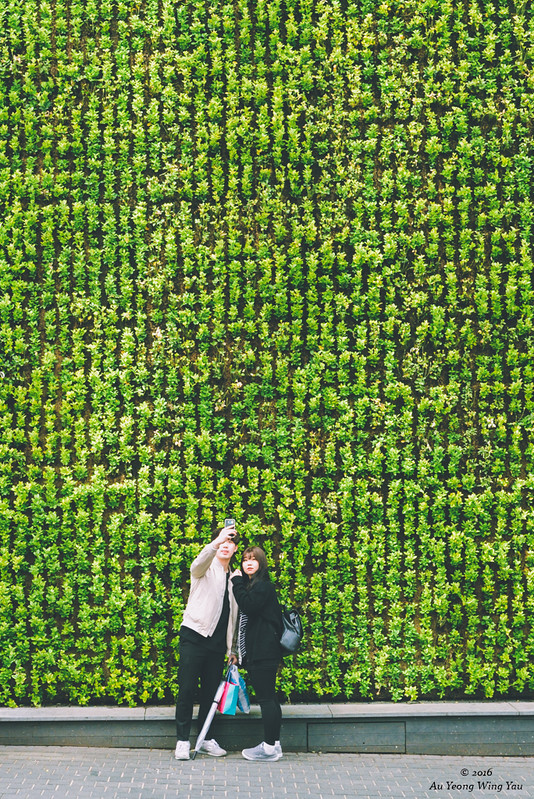 Streets Of Myeong-Dong 2016: The Green Wall And Couple Selfie
