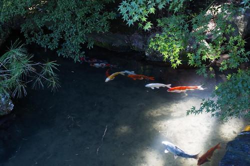 京都をめぐる冒険 青蓮院1