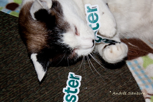 Buddy Eats His New Catster Stickers-1