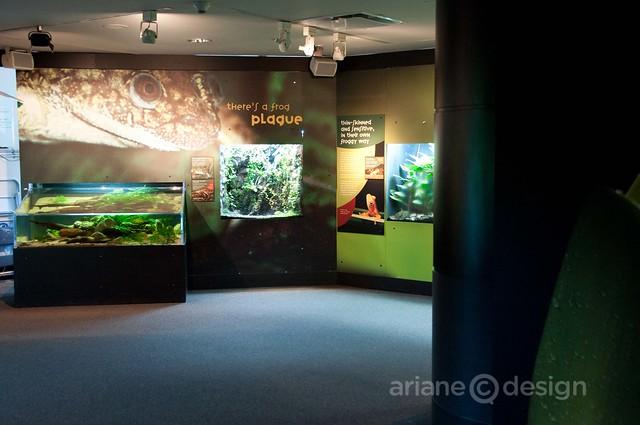 Frog exhibit