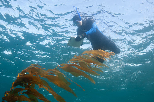 Fish Survey 1