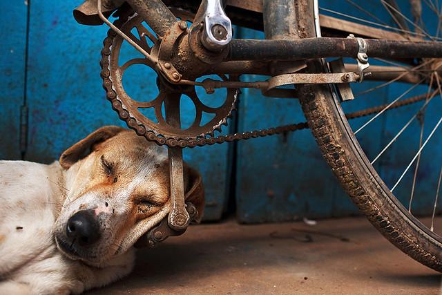 Sleeping dog - Varanasi, India