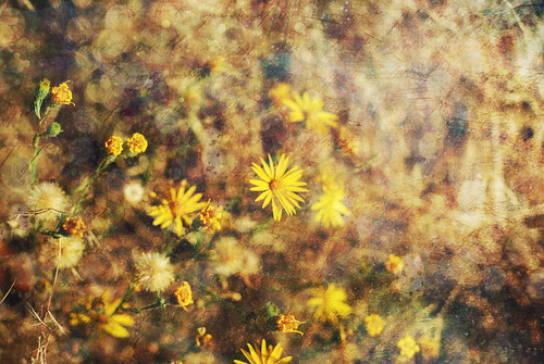 Yellow Flowers Textured