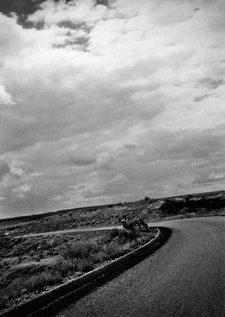 1990, Antelope, Petrified Forest, Arizona