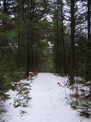 Pine Path - Snowy Version