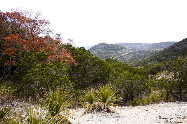hill country state natural area_12 10 11_0208