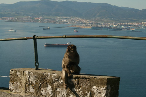 monkey view