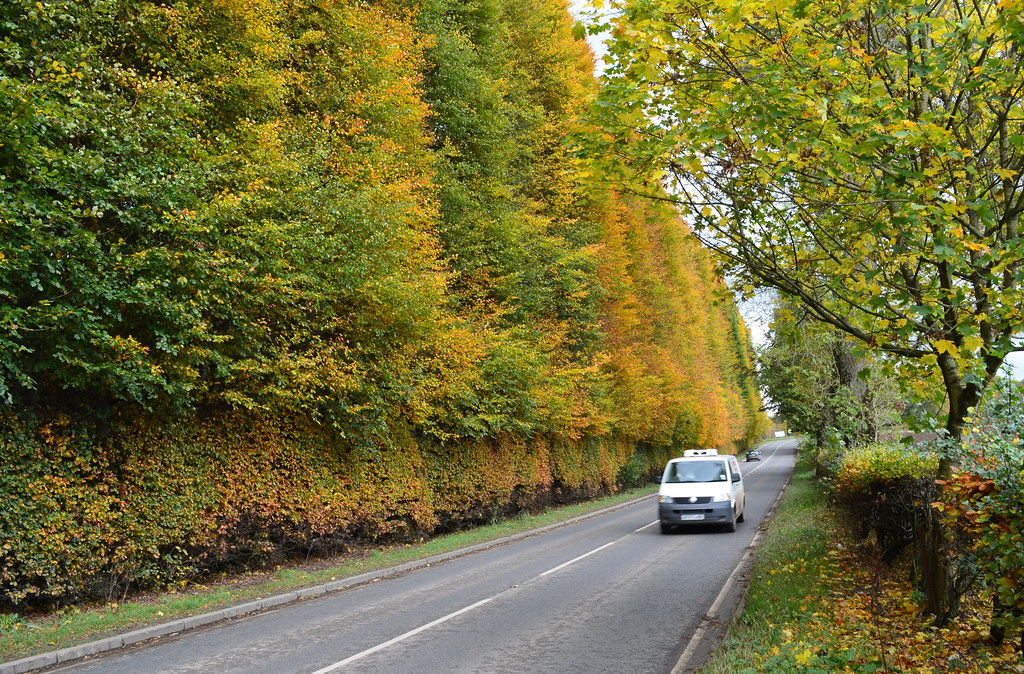 Tour Scotland Photograph Autumn Meikleour Beech Hedge Perthshire October 27th 04