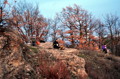 Le radici degli alberi dicembre 2011 for Alberi simili alle querce