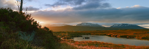 scotland rpp шотландия фотосафари