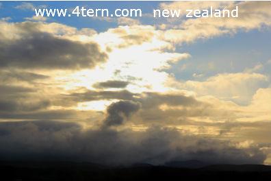 纽西兰打工度假-网上寻找工作
