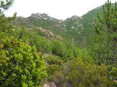 Plateau du Niffru : vers le N, crête de Niffru et le col de Capeddu