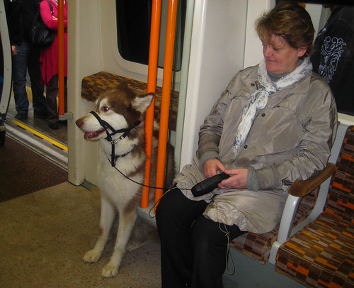 Husky on the London Overground