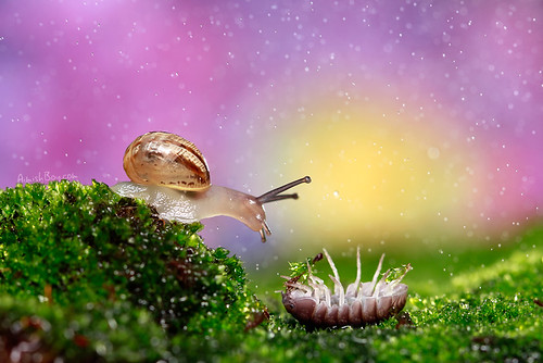 light sunset sun snow color macro cute eye nature animal sunrise canon bug studio climb colorful bokeh magic creative snail games bugs 100mm fantasy conceptual tale pill biological woodlice woodlouse speckles armadillidium זריחה חילזון מאקרו 60d canon60d בוקה כדרורית