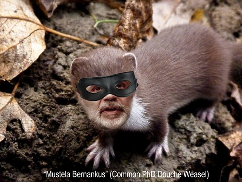 MUSELA BERNANKUS by Colonel Flick