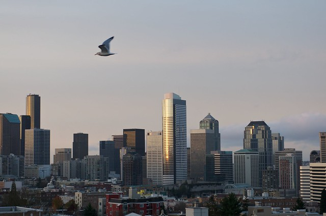 Gull Over Seattle