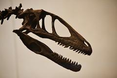tyrannosaurus, close-up,