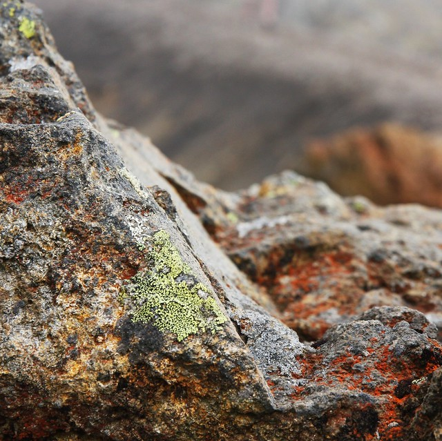 Lichens on a rock at Emerald Lake, Mt. Tongariro