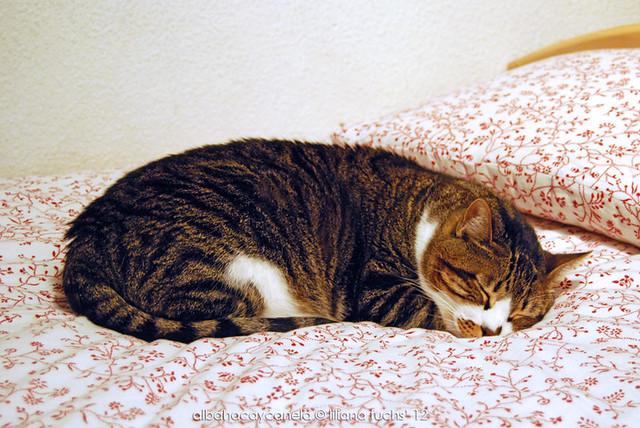 Dreaming - Mi gato durmiendo
