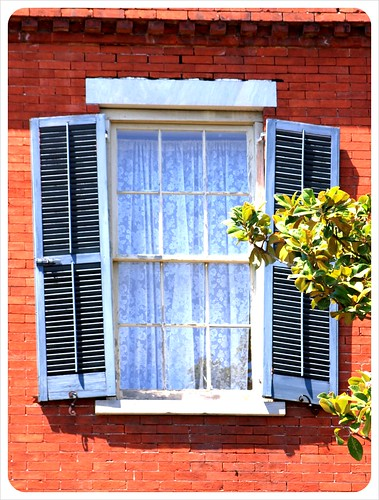 savannah window