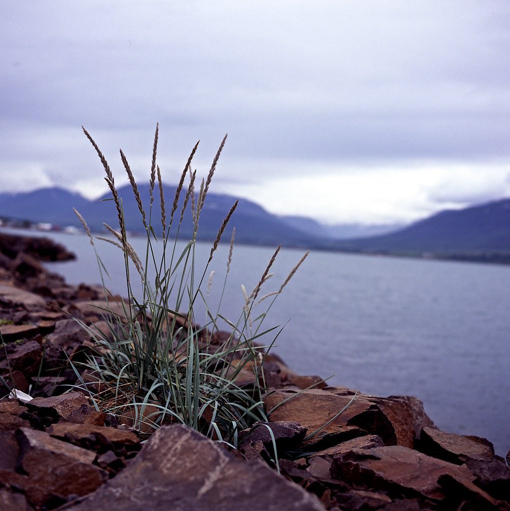 "Image titled ""Akureyri, Iceland."""