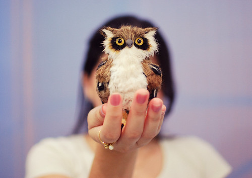 little owl ♥