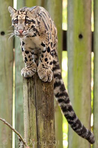 2011-12-26 - Zoo-712